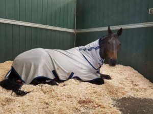 Horse relaxing at Hebden Wood Equestrian, Harrogate Livery